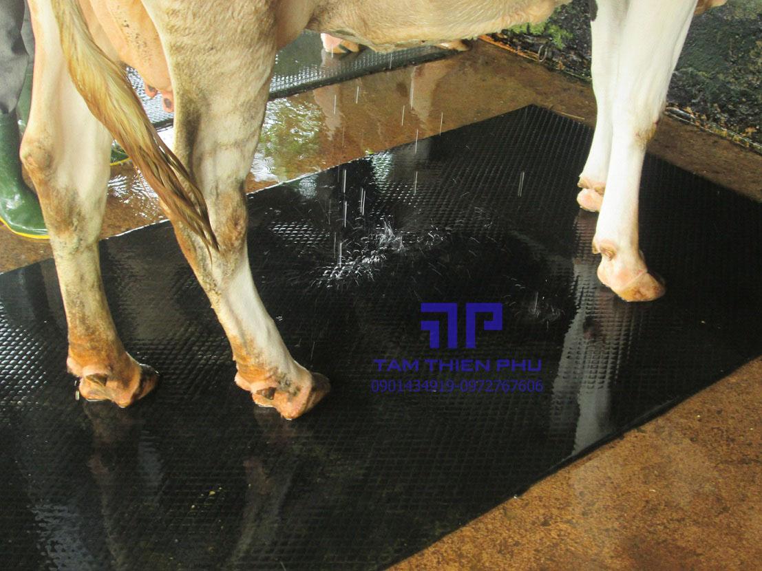 Tấm cao su lót sàn gia súc